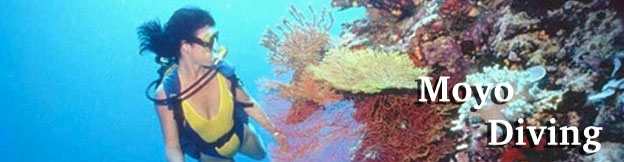 moyo-diving